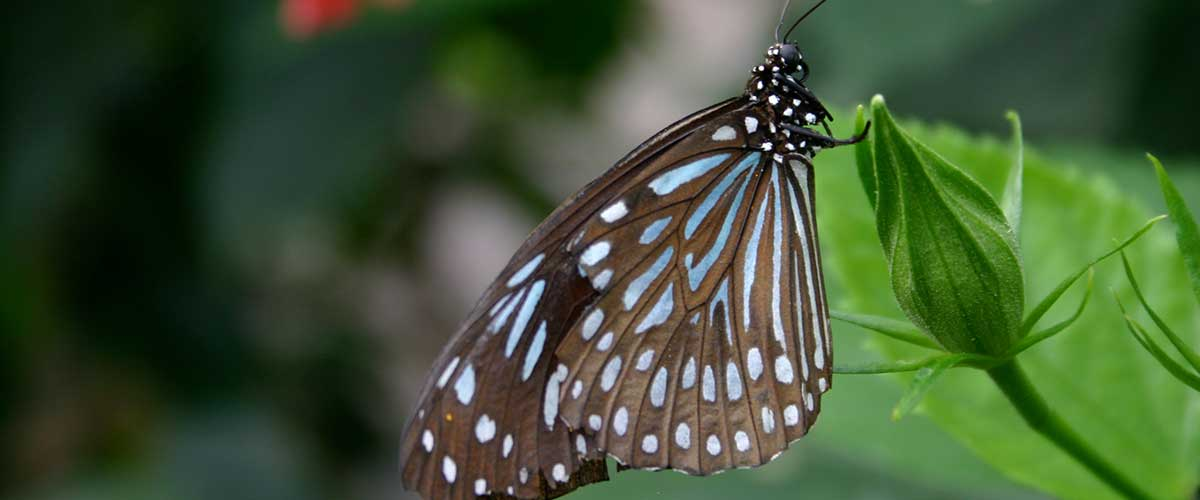 Butterfly Genus Species featured image