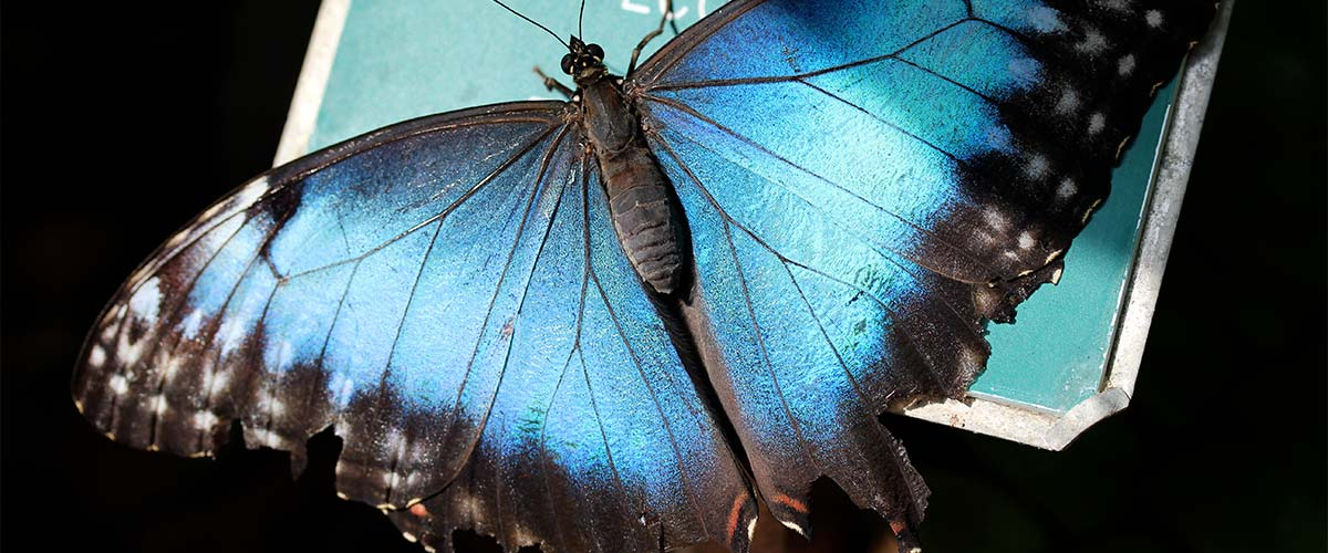 Morpho Butterfly Rainforest featured image