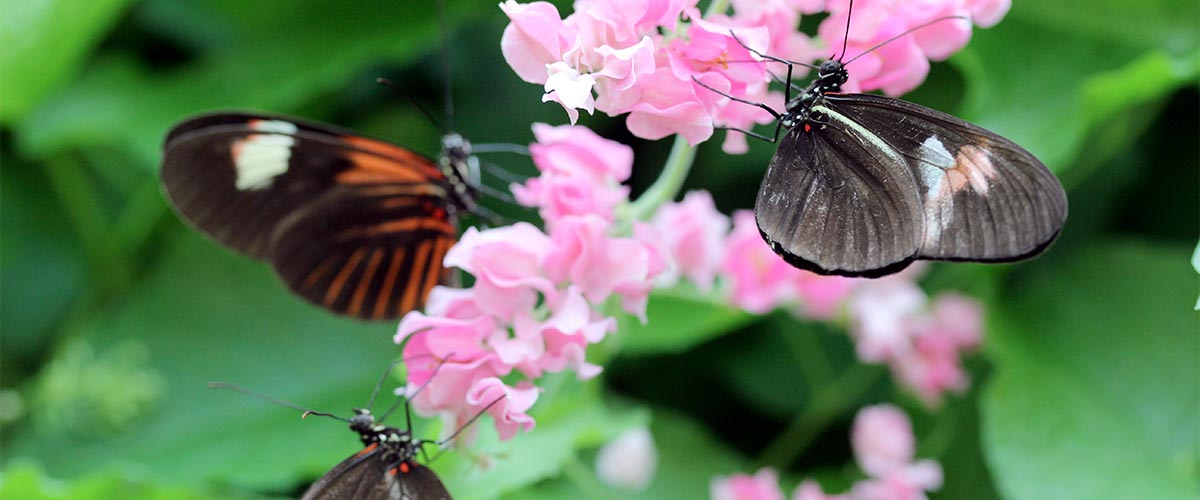 Nectar Plants For Butterflies featured image