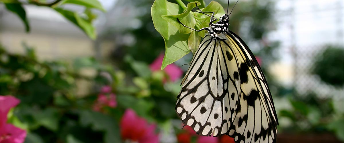 Facts About Butterflies header image