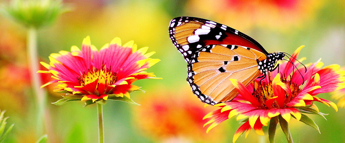 The Butterfly Garden Guidebook